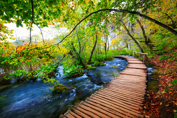 Boardwalk in the park Plitvice lakes Wall mural