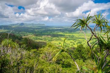 Fototapete - Stunning view of spectacular jungles, Kauai, Hawaii