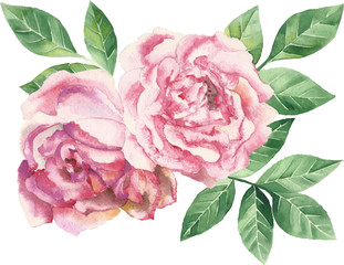 Vector watercolor illustration - pink flowers