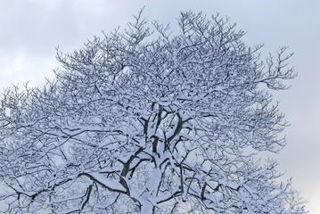 木々に積もる雪.