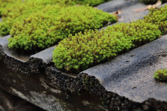 roof is covered with green moss