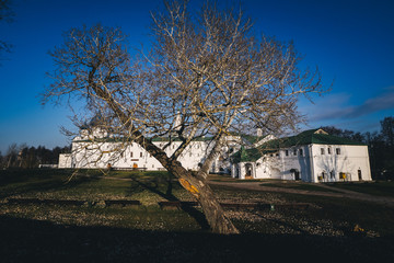 Tree without leaves with white house background