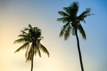 Two Coconuts tree background blue sky and sunset in Thailand local