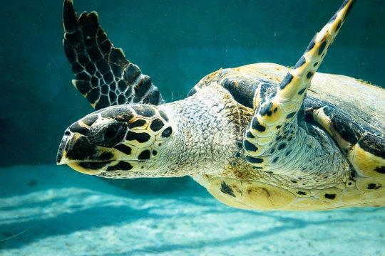 The green turtle in Aquarium
