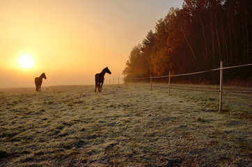 Two horses near by forest during wonderful misty sunrise in november
