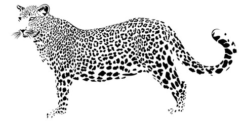 The far eastern leopard on a white background