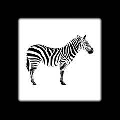 The black zebra on white background in frame