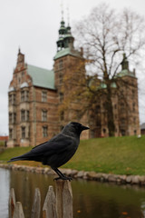 Crow sitting on fence against Rosenborg castle in Copenhagen, Denmark