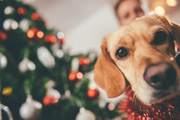 Dog sitting by the christmas tree