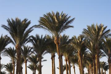 Palm trees beautiful tropical sunset at beach photo