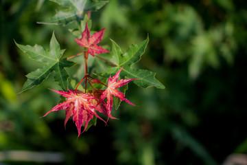 Foliage Image