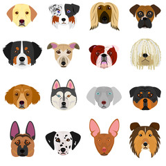 dog faces set on white background