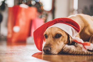 Dog wearing santa hat laying on floor