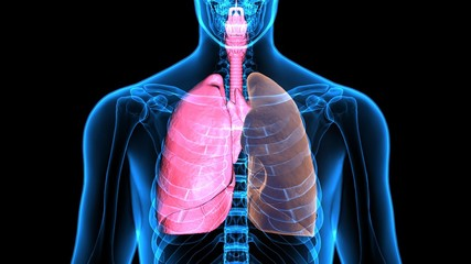 3Dillustration  Healthy Lung and Smokers Lung