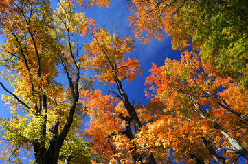 low angle view on colorful autumn trees and sky