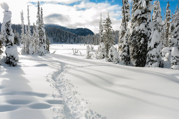 Snowshoe trails at Paradise Meadows at Mount Washington British Columbia in winter showing snow on trees and ground and cross-country nordic skiing in background sunny day blue sky