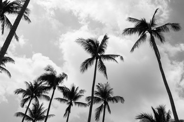 Palm trees (Black and white)