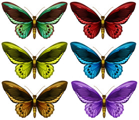 Monarch butterflies in six different color wings
