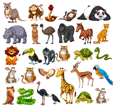 Different types of wild animals on white