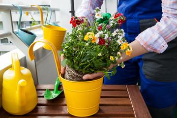 Pflanzen Balkon eintopfen Frühling