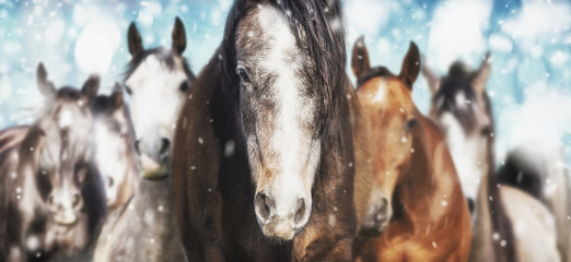 Herd of horses on frosty winter  background with snow fall , banner
