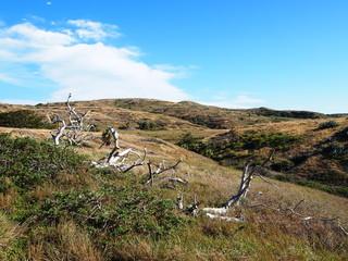 聟島(ケータ島) 枯れ木と荒野