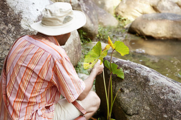 Science and environment. Rear shot of conservationist or ecologist wearing striped shirt and panama hat holding plant with green leaves and studying numerous spots on them, ready to make test