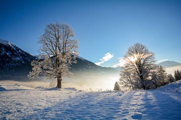 Traumhafte Winterlandschaft mit verschneiten Bäumen in den österreichischen Alpen bei Salzburg