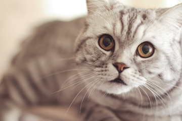 Beautiful gray cat with long whiskers