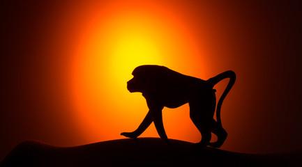Monkey silhouette on sunset