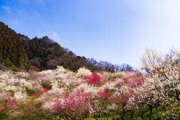 高尾梅郷の風景