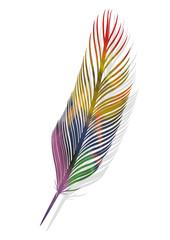 Plume multicolore