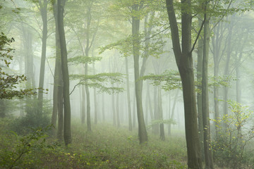 Lush green fairytale growth concept foggy forest landscape image