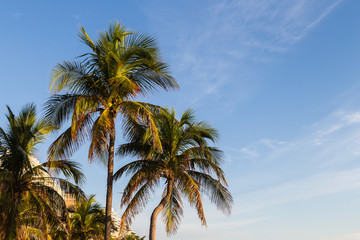 Blue sky and palm tree/Beautiful early morning at tropical beach.