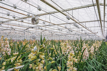 orchids growing in a greenhouse