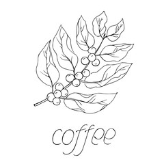 vector white black simple coffee silhouette word illustration