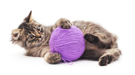Cat with a ball.
