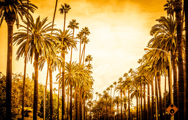 Spoed Fotobehang Los Angeles Palm trees in Los angeles