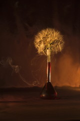 Still life composition with dandelion seeds