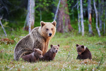 Female brown bear and her cubs