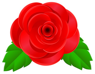 Rose with green leaf vector image