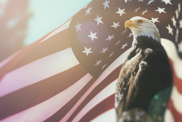 Poster Eagle American Bald Eagle Flag Patriotism. Bald Eagle, symbol of American freedom, perched in front of an American flag. United States of America patriotic symbols.