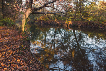 Quiet river and woods with trees and colorful leaves at autumn