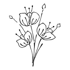 Vector floral illustration.Branch with flowers with leaves isolated on the white background. Hand drawn contour lines and strokes. Graphic vector illustration