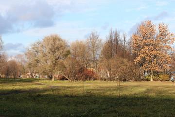 Autumn park trees bare