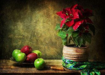 Classic still life with beautiful Poinsettia wrapped in silky green scarf,placed with vintage plate of apples on rustic wooden table..