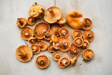 Mushrooms on the light background