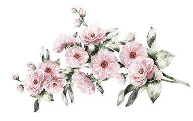 Watercolor flowers and herbs floral illustration flower in pastel see more mightylinksfo