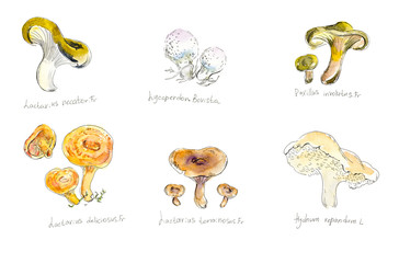 Collection mushrooms. Forest miniatures. Watercolor hand drawn illustration.