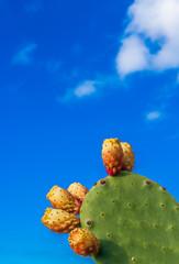 Kaktus mit Kaktusfeige vor blauem Himmel mit Platz für Text